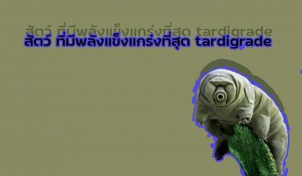 สัตว์ ที่มีพลังแข็งแกร่งที่สุด tardigrade