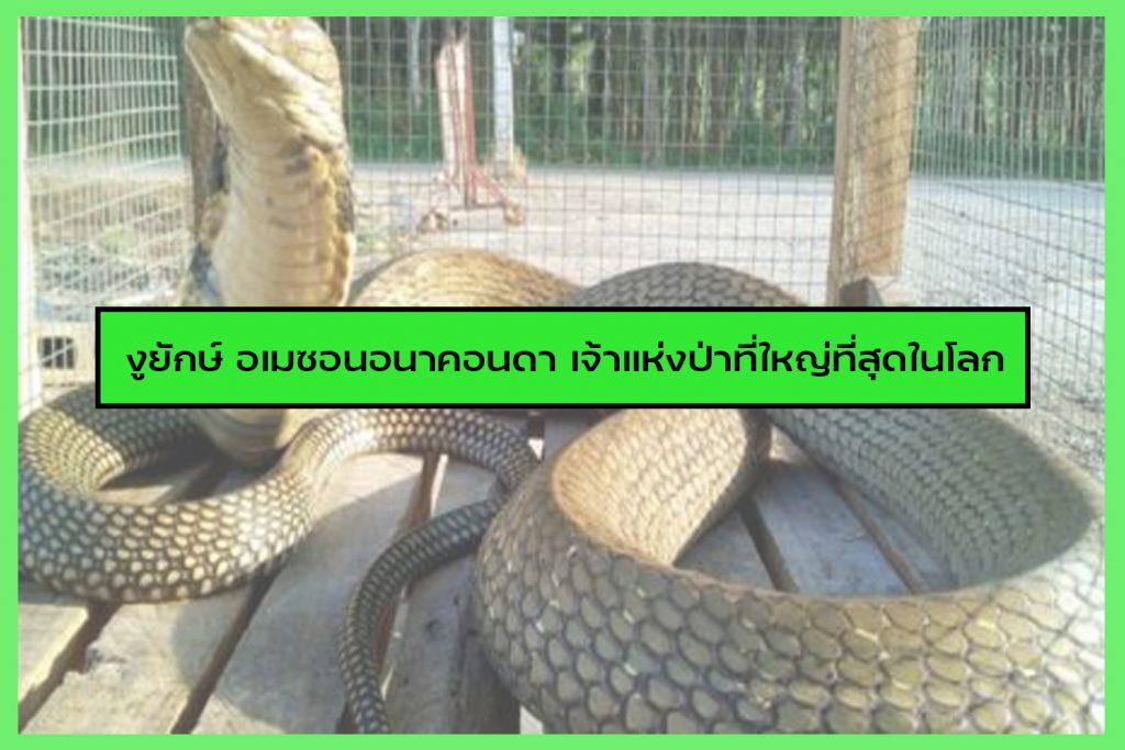 งูยักษ์