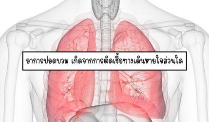 อาการปอดบวม เกิดจากการติดเชื้อทางเดินหายใจส่วนใด