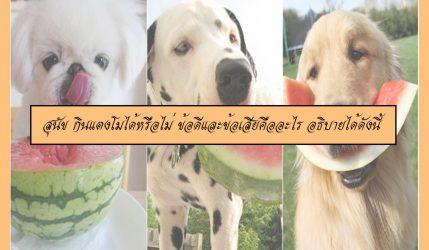 สุนัข กินแตงโมได้หรือไม่ ข้อดีและข้อเสียคืออะไร อธิบายได้ดังนี้