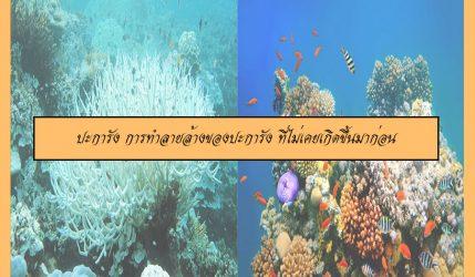 ปะการัง การทำลายล้างของปะการัง ที่ไม่เคยเกิดขึ้นมาก่อน